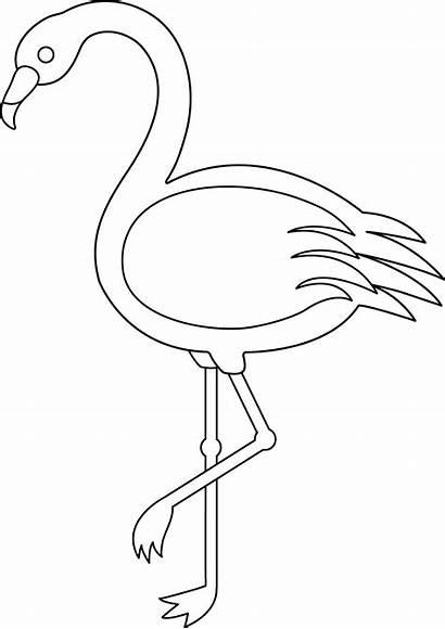 Flamingo Outline Coloring Sweetclipart