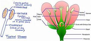 Diagram Of A Plant Reproductive System