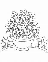 Columbine Bunch Coloring Pages sketch template