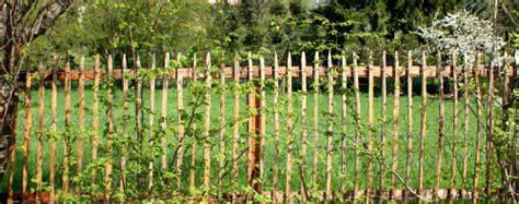 Hochwachsende Pflanzen Sichtschutz by Sichtschutz Pflanzen F 252 R Jeden Garten Der Hecke Bis