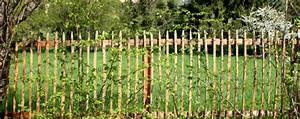 Garten Pflanzen Sichtschutz : sichtschutz pflanzen f r jeden garten von der hecke bis zur ranke gartenblog von fr schl ~ Sanjose-hotels-ca.com Haus und Dekorationen