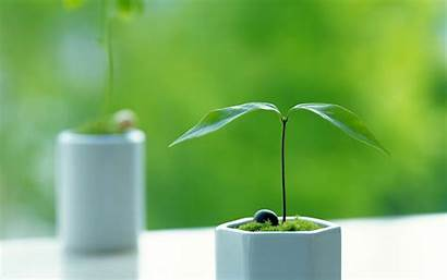 Plant Background Wallpapers Wall