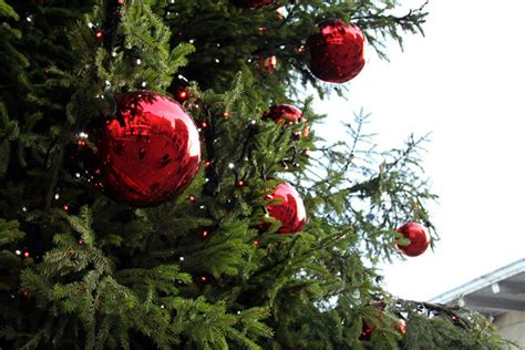 awesome christmas tree ornaments  outdoor ideas