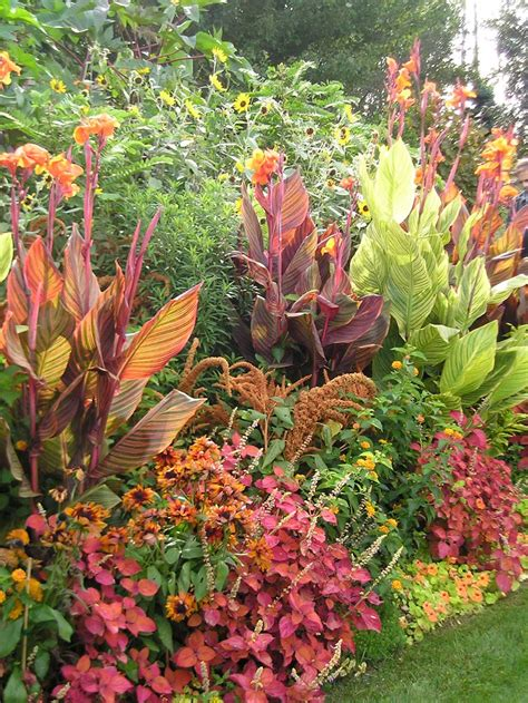 when to plant flowers fresh ideas for growing cannas in your garden longfield gardens