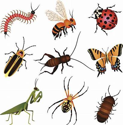 Insect Insects Garden Clipart Beneficial Creatures Insekten