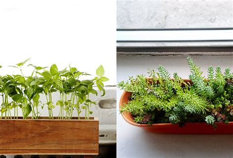 Indoor Window Sill Plants by 17 Best Images About Window Boxes On Window