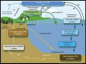 The Role Of Terrestrially Derived Organic Carbon In The