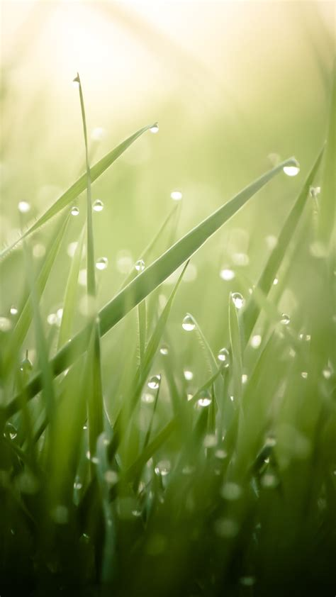 Green Wallpaper Hd by Wallpaper Grass 4k Hd Wallpaper Green Drops Dew Sun