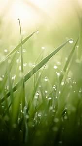 Wallpaper Grass  4k  Hd Wallpaper  Green  Drops  Dew  Sun