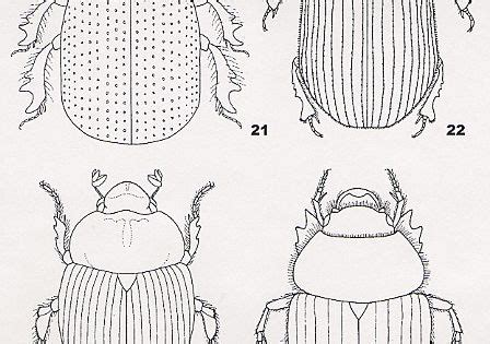 coloring pages  kids egypt dung beetle scarab