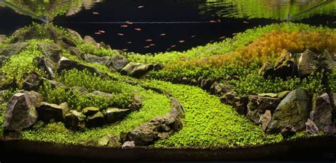 Aquascapes Aquarium by The Majestic Aquariums Of The Tokyo Aquascape Union