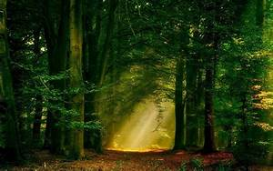 Sun, Rays, Forest, Nature, Path, Trees, Landscape, Mist, Wallpapers, Hd, Desktop, And, Mobile
