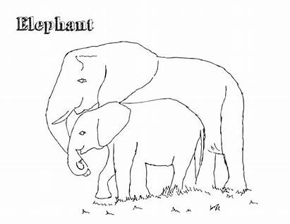 Elephant Coloring Pages African Elephants Colour Printable
