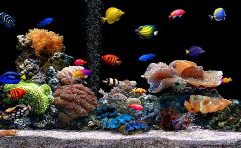 Free Animated Fish Desktop Wallpaper - tropical fish wallpapers wallpapers gallery