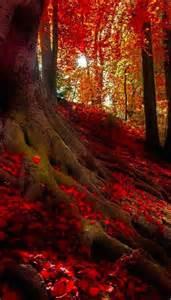 Crimson Forest Bavarian Alps Germany