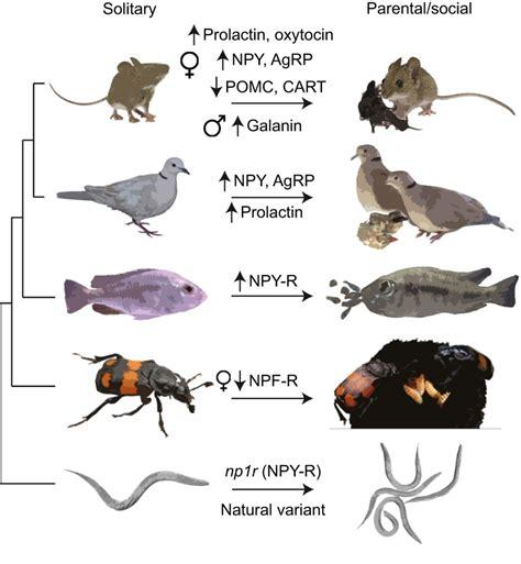 modification  feeding circuits   evolution