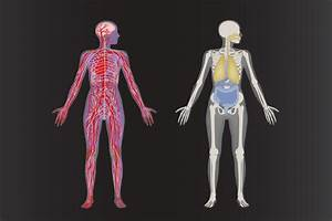 The Interconnected Systems Of The Human Body