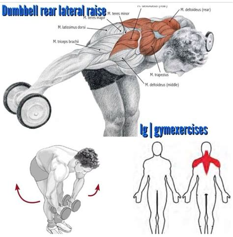 rear pec deckbent lateral raises 52 best images about shoulder exercises on