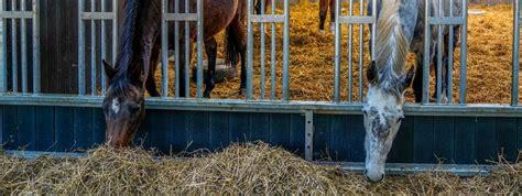 breeding plantation horse centre farm foaling stud