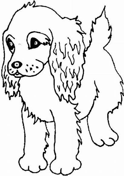 Spaniel Drawing Cocker Coloring Drawings Getdrawings