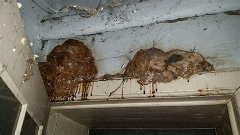 odeur d humidit dans la maison les signes indiquant un problme dans la maison sont pour que le