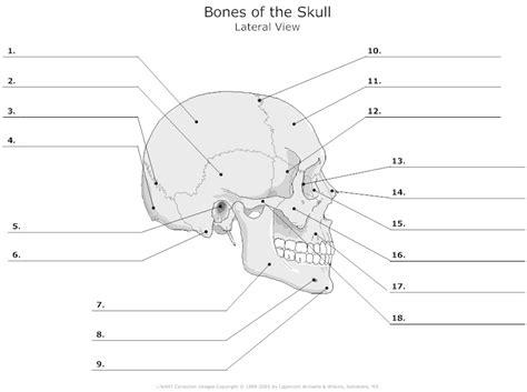 cranium skeletal learning