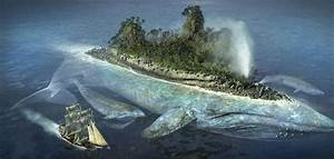 Megalodon Shark Compared To Blue Whale