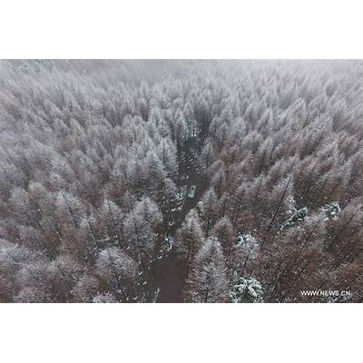 Snow-covered forest in Chongqing southwest China - Xinhua