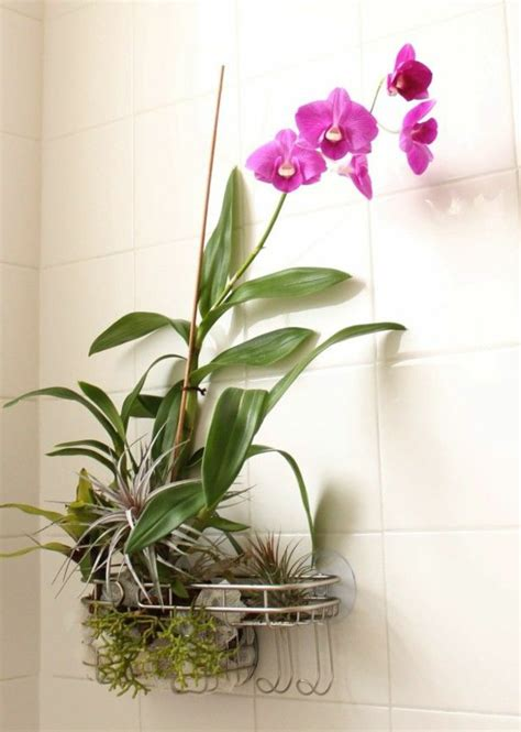 Pot Plants For The Bathroom by Houseplants Pictures Cosy Decoration Ideas With Potted