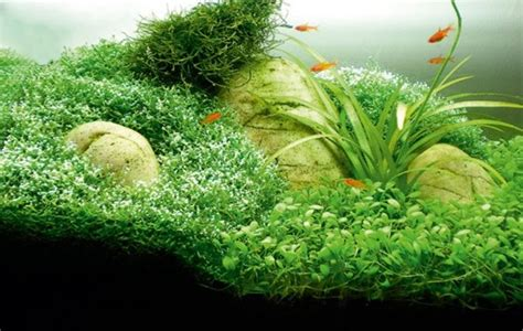 Aquascape How To by How To Aquascape Small Tanks Practical Fishkeeping