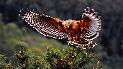 Birds Bird Exotic Wild Wings Animal Desktop