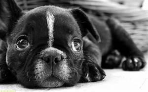Puppy World: Cutest Puppy Pictures