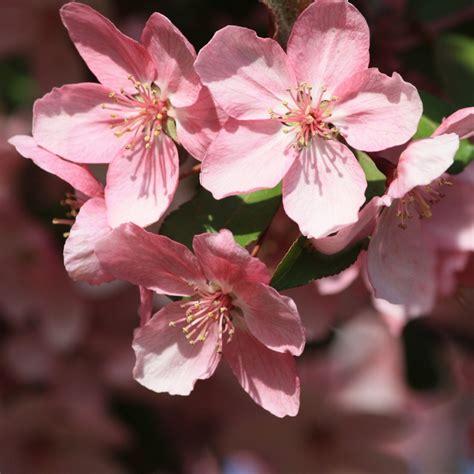 Free Images : landscape nature flower petal bloom