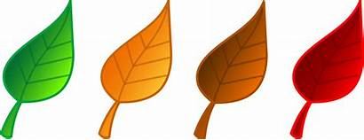 Animated Leaves Leaf Clipart Clipartmag
