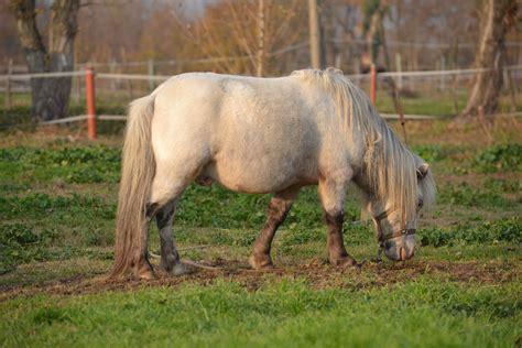 cavalli e carrozze i cavalli e le carrozze a s d cavalli e carrozze