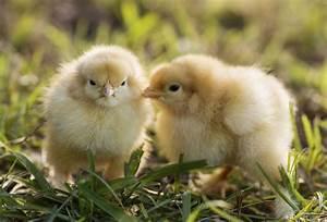 Animal Protection: A Domestic and Foreign Affair - Wayne ...