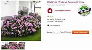 Hortensie Endless Summer Standort : tom garten erfahrungen unsere bewertung f r den ~ Lizthompson.info Haus und Dekorationen