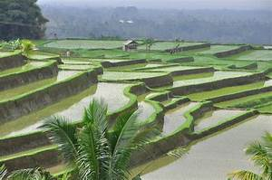 Rice fields in Bali. Explore #1 09/09/2012 | Read my new ...