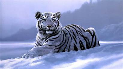 Tiger Desktop Wallpapers 1080p