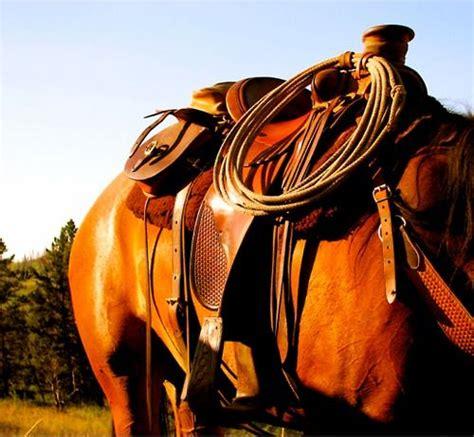 riding horse gear