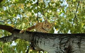 cat climbing tree cats are amazing climbers cat compilation
