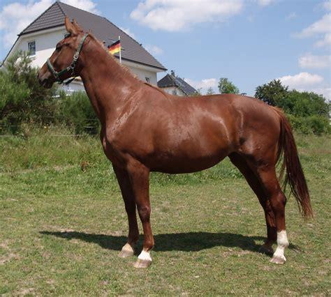 pferde stute tieranzeigen seite