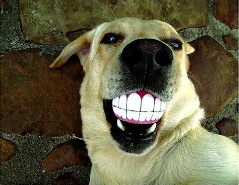 rogz grinz smiling dog ball toys pet design idea