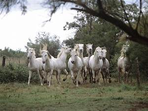 HD Animals Wallpapers: White Horse Photos