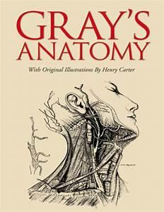 Gray's Anatomy by Henry Gray, Hardcover | Barnes & Noble®