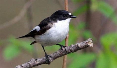 Populārākie putni pasaulē - Spoki