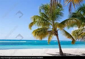 Bilder Von Palmen : palmen am strand von isla saona lizenzfreies bild 14030875 bildagentur panthermedia ~ Frokenaadalensverden.com Haus und Dekorationen