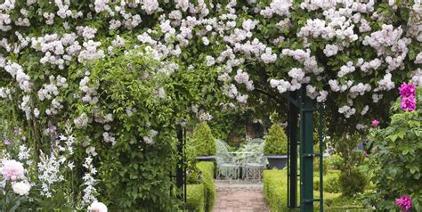 How To Find The Perfect Climbing Plants For Your Garden
