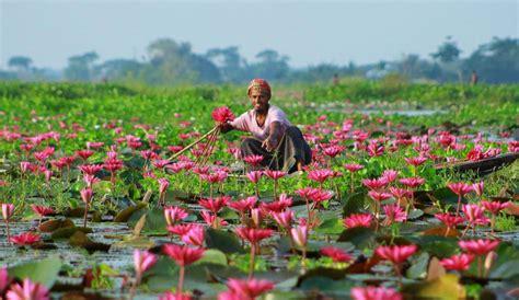satala lily village bangladesh picture bangladesh