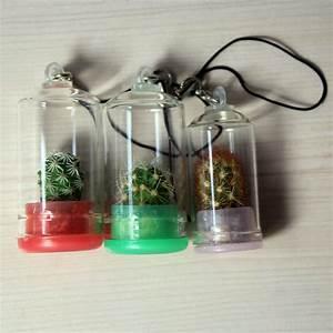 Pflanze In Flasche : 10pcs lot pflanze schl sselbund echte kaktus in a flasche schl sselanh nger eine erstaunliche ~ Whattoseeinmadrid.com Haus und Dekorationen